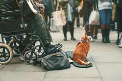 A street cat named Bob (Sabrina-Romano) Tags: street cat bob wheelchair photography urban london uk unitedkingdom england guitar people human 35mm nikond90 musician