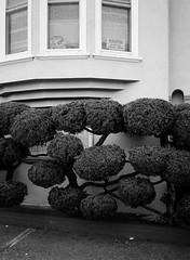 Outer Mission // San Francisco (bior) Tags: fujifilmga645zi ga645zi ilfordfp4plus125 fp4 fp4plus ilfordfilm sanfrancisco 6x45cm 645 mediumformat filmphotography film outermission homes houses rowhouse street bush shrub sign