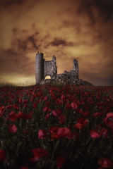 Papaver (Daniel Pastor 70) Tags: flowers flores castillo castel ruinas caudilla castillalamancha amapolas noche night