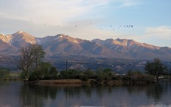 Morning Departure (Patricia Henschen) Tags: clouds lake frantzlake frantz swa statewildlifearea sawatch range mountains mountain salida colorado spring trees reflection reflections coloradoparkswildlife sunrise alpenglow bird ibis whitefaced