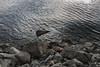 (Housemill) Tags: canon eos canonrebel sweden huskvarna vättern water rocks contrast art lake sea
