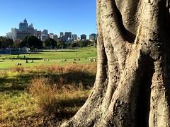 IMG_0285 (dudegeoff) Tags: 20180505csydaroundalfredpark sydney australia 2018 may princealfredpark