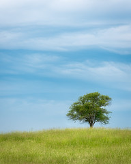 Antietam Tree (jcernstphoto) Tags: sharpsburg civilwar maryland antietam battle lonelytree tree field serene