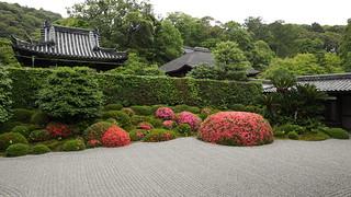 Azaleas Zen Rock Garden / Shuon-an Ikkyu-ji Temple 酬恩庵 一休寺