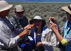 Whiptail3 (Wolfram Burner) Tags: enhs eugene natural history soceity 2018 fieldtrip field trip lake abert paisley cave wolfram burner