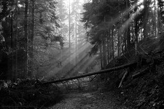 The power of nature can not be tamed (Drehscheibe) Tags: wald holz baum nikonf2 analog ilfordhp5 forest blackwhite