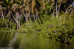 Nature's Gift (Balaji Photography - 5 M views and Growing) Tags: kerala indiatravel indiatourism india poovar trees backwaters naturesgift naturesfinest