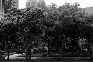 street trees@Taipei, Taiwan