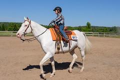JBC_5819.jpg (Jim Babbage) Tags: krahc bethany appaloosa horses horseshow 2018