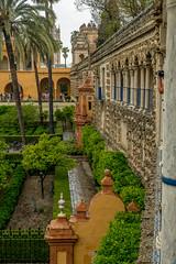 Real Alcazar, Seville, Spain (Blackburn lad1) Tags: alcazar garden seville spain stonwork tree xt20 building andalusia whs unesco