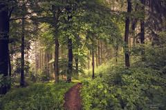 follow me (Rita Eberle-Wessner) Tags: forest wald woods baum tree bäume trees buchen laubwald laub leaves waldlichtung lichtung odenwald path weg waldweg pfad pathway zauberwald