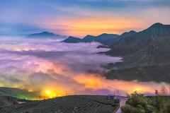 大崙山觀光茶園 (張麗芬) Tags: taiwan 南投縣 鹿谷鄉 大崙山 茶園 夕陽 雲海 琉璃光 夜晚 雲彩 山