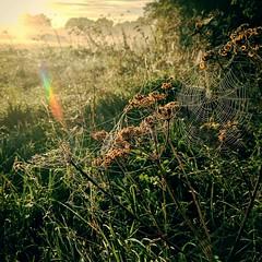 Spider webs (Kol Tregaskes) Tags: koltphotography photo photography photooftheday pic picoftheday picture pictureoftheday