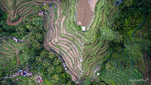 Aerial view of a Beautiful Rice Terrace