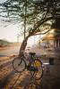 Hercules (*trevor) Tags: asia fujifilm ganaheda india pushkar travelphotography xt2 bicycle bike morning sunrise