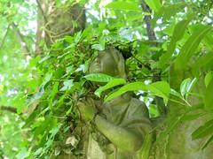 Angel (msganching) Tags: brockleyandladywellcemetery cemetery brockley graveyard london southlondon angel grave victorian