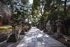 sumiyoshi taisha (Flutechill) Tags: sumiyoshitaisha osaka japan travel famousplace landmark sumuyoshitaishashrine traveldestinations tranquilscene buddha buddhism religion architecture landscape exploration 住吉大社