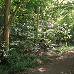 Shadowy woodland with glimpses of the sun thumbnail