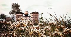 Off On Holiday (kimmyridley) Tags: holidaytime afk secondlife butterflybeach secondlifenature nature landscapes destination exploring flowers tallgrass exploringvirtualworlds