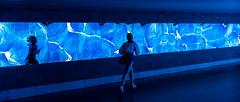 Running Against Herself (drasphotography) Tags: wiesbaden underpass blue monochrome monochromatic drasphotography nikon d810 nikkor2470mmf28 nightshot girl running blau reflection reflektion unterführung mirror spiegel urban city silhouette