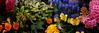 Flowers (Pico 69) Tags: flowers bunt pico69
