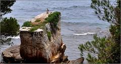 vue sur mer ! (Save planet Earth !) Tags: bird seagull oiseau mer amcc nikon paca sea france sud côtedazur
