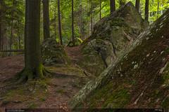 PP Vela (jirka.zapalka) Tags: vela czechrepublic forest trees hills rocks summer