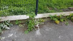 Quartier de la gare : L'entretien du pied de mur du terrain communal