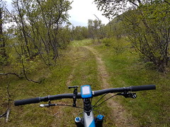 Another boring capture of the trails I like, but I like it alot, had a very nice and cosy trip:-) (GeirB,) Tags: andersby tyskerstien outdoor uteliv varanger vadsø vadsoe sweethelmet terrengsykling stisykling arctic 70north friskifinnmark fun bar trekfuelex9 norway northernnorway training trail bontrager maxxis 29x240 dropline finnmark østfinnmark offroad oakley spiuk garmin gps lyng grass pathbike fulldemper