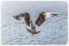 I don't know if the camera likes me, but I do like the camera. (Yuri Dedulin) Tags: birds funandtravel gulls nature ocean seabirds seagulls travel yuridedulin