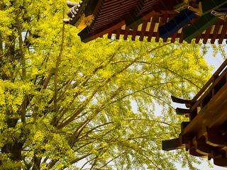 Fresh Green through Nezu Shrine Roof
