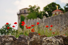 Poppy (Marija Mimica busy!!!) Tags: poppy flower church old ngc floralfantasy