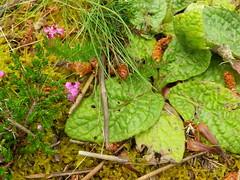 Naturaleza en el Parque de San Roque en Ribeira(Coruña-Galicia-España) (Los colores del Barbanza) Tags: parque de san roque ribeira barbanza coruña galicia españa spain green leaf