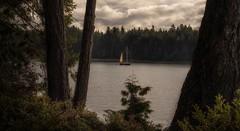 home at sea... (Alvin Harp) Tags: sailboat pugetsound washingtonstate us101 bay may 2018 sonyilce7rm3 fe2470mmf28gm trees pacificocean seaandland alvinharp