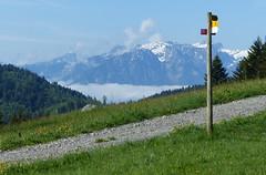 Auf die Corbetta - Fribourg - Suisse / Schweiz (thobern1) Tags: corbetta chatelstdenis lespaccots fribourg westschweiz romandie schweiz suisse switzerland