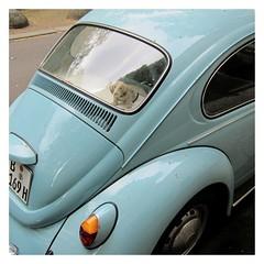 Ja-Sager / Yes Dog (bartholmy) Tags: berlin wilmersdorf wackeldackel nickhund bobblehead noddingdog vw volkswagen käfer beetle bug hellbalu lightblue ablage rearshelf rücklicht rearlight spiegelung reflection poller bollard tag radkappe hubcap hipsterauto hipstercar