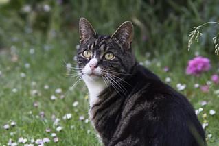 Matsu de kat