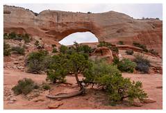 Wilson Arch (Paulemans) Tags: 2018usavacation paulemans paulderoode wilsonarch arch rock utah sonyfe424105goss nikvivenza