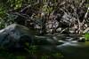 Oak Creek Canyon 2 (benakersphoto) Tags: az arizona arizonatowns oakcreekcanyon landscape creek river water motion slow slowshutter long exposure nikon nikkor