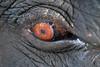 Parc National de Kaziranga (Globespotter) Tags: inde india tigre tiger rhinoceros elephant parc national de kaziranga