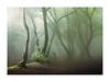 Coombe Hill 28 May 2018 (Matthew Dartford) Tags: matthewdartford atmospheric backlight backlit branch breakinglight depth fog foggy forest landscape leaf leaves mist misty tree trees trunk woodland woods