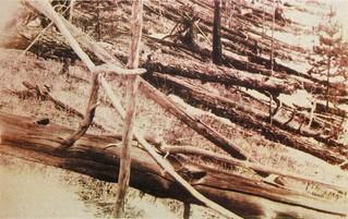 Tunguska devastation