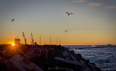 En el Puerto (Mauro Esains) Tags: agua mar amanecer cerros playas rocas cielo paisaje nikon colores nubes aves gaviotas patagonia chubut