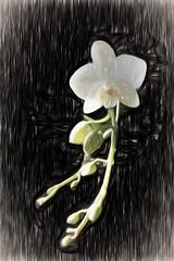 Orchid (Bucky-D) Tags: fz1000 flora flower orchid panasoniclumixdmcfz1000 topazremask topazstudio topazimpression liquidpencil