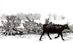 Postcrossing DE-7260288 (booboo_babies) Tags: blackwhite cow art painting drawing newyork newengland 1990 farm postcrossing