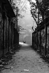 Dog in a lane (Shahrear94) Tags: bnw blackandwhite monochrome monochromatic blackwhite dog lane shadow light lines following canon flicker bangladesh composition mono eyes directional
