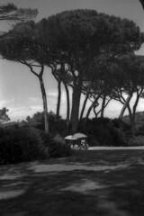 Umbrellas - Baratti (Tuscany)  - June 2014 (cava961) Tags: baratti tuscany analogue analogico monocromo monochrome bianconero bw
