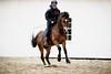Welsh Cob Parc Alfe (vesterskov) Tags: daniel vesterskov foto photo fotografi photography sony a99 a99v slta99 slta99v sigma 70200mm f28 28 ii ex dg apo macro hsm 70200 mm full frame fullframe team pony power horses horse hest hesteliv heste dansk danish ponies riding ride welsh mountain cob heidi wife