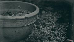 The Pot (MBates Foto) Tags: availablelight blackandwhite bokeh daylight existinglight monochrome nikon nikond810 nikonfx outdoors plants pot texture zeisslens spokane washington unitedstates 99203