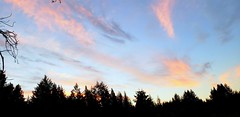 Kitsap Peninsula Sunset (rve13) Tags: wetland sunset kitsappeninsula galaxys9 cloudsstormssunsetssunrises